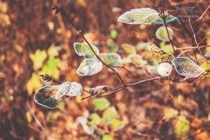 fotograf-Szczecin-00016