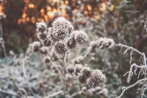 fotograf-Szczecin-00017