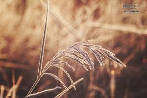 fotograf-Szczecin-00019
