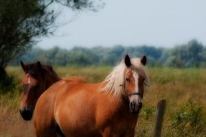 konie-na-wybiegu-swinoujscie