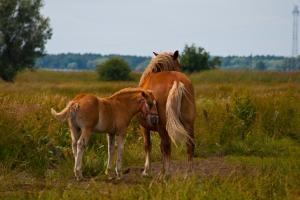 konie-swinoujscie