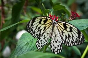 swinoujscie-motyle-zdjecia